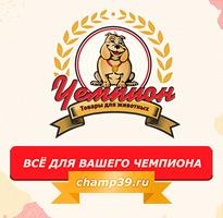 """Разработка корпоративного сайта для магазина """"Чемпион"""""""